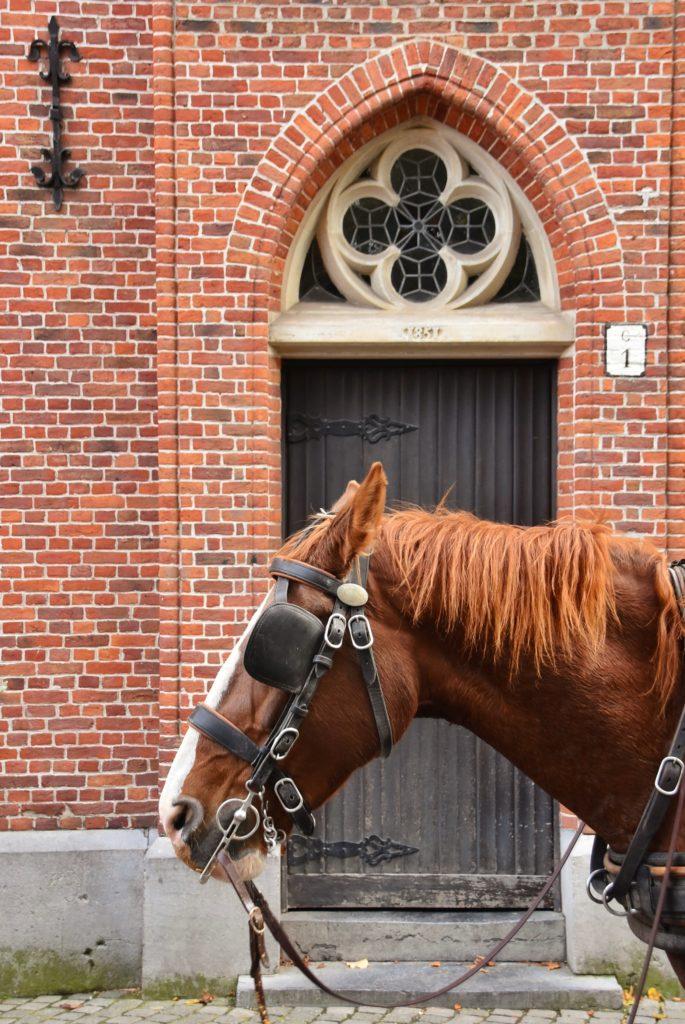I cavalli nella città di Bruges
