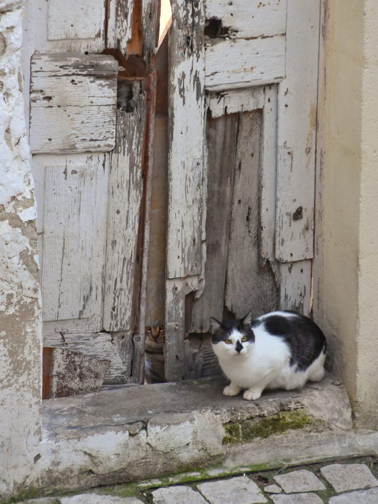 Gatti a Matera